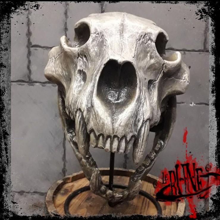 Helmet Bear Skull